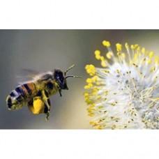 Ekologiška bičių duonelė su medumi